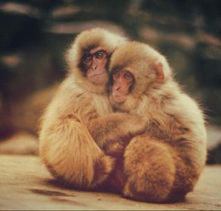 拥抱的图片动物